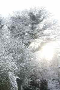 Sunlight through snowy branches